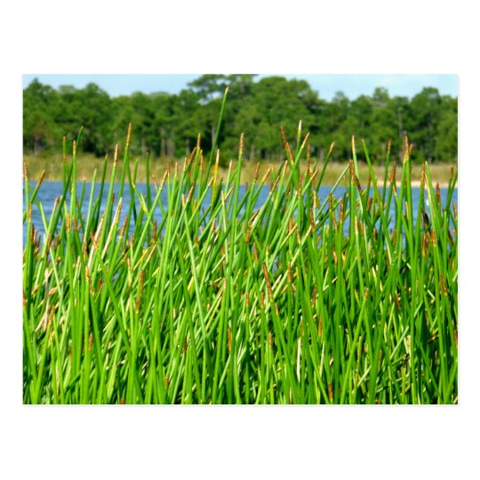 Reeds trees pond background postcard