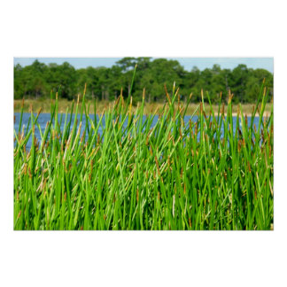 Reeds trees pond background poster