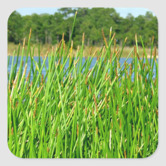 Reeds trees pond background square sticker