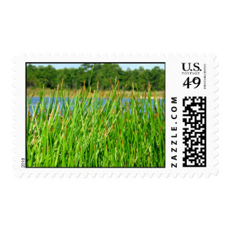 Reeds trees pond background stamps