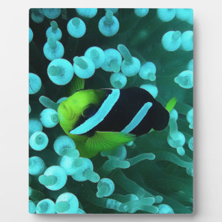 reef-362075  reef fish meeresbewohner exot underwa photo plaques