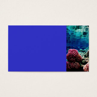 reef-386973  reef coral landscape colorful underwa business card