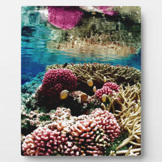 reef-386973  reef coral landscape colorful underwa display plaque