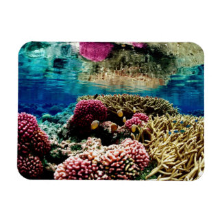 reef-386973 reef coral landscape colorful underwa rectangular magnets
