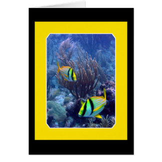 Reef - Ambergise Caye - Belize Card