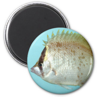 Reef Butterfly fish 2 Inch Round Magnet