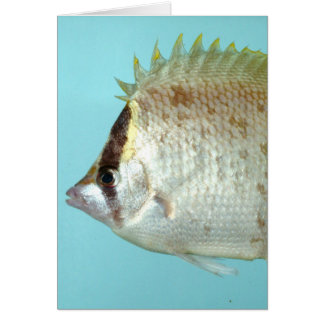Reef Butterfly fish Card