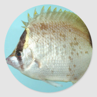 Reef Butterfly fish Classic Round Sticker