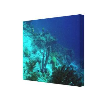 Reef Edge Canvas Print