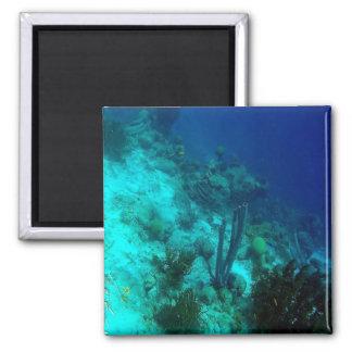 Reef Edge Magnet