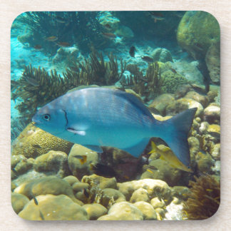 Reef Fish Coaster