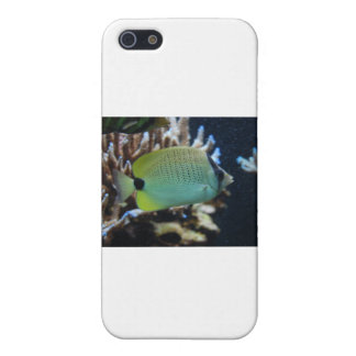 Reef Fish iPhone 5 Case