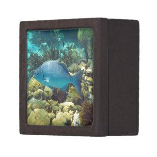 Reef Fish Jewelry Box