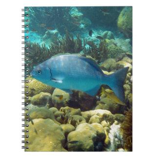 Reef Fish Notebook