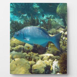 Reef Fish Display Plaque