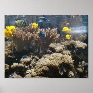 Reef Fish - Tangs Poster