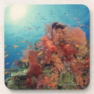 Reef scenic of hard corals , soft corals 2 beverage coaster