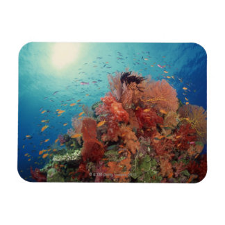 Reef scenic of hard corals , soft corals 2 magnet
