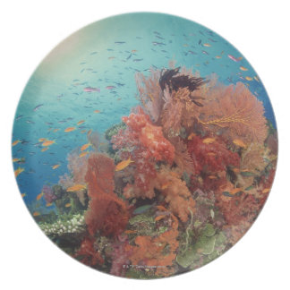 Reef scenic of hard corals , soft corals 2 melamine plate