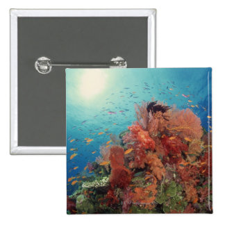 Reef scenic of hard corals , soft corals 2 pinback button
