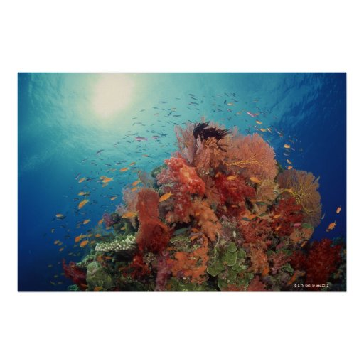 Reef scenic of hard corals , soft corals 2 poster