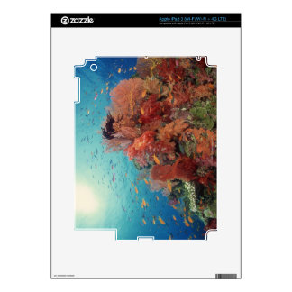 Reef scenic of hard corals , soft corals 2 iPad 3 decals