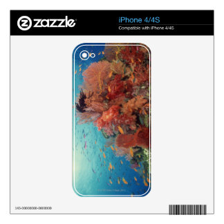 Reef scenic of hard corals , soft corals 2 skin for iPhone 4