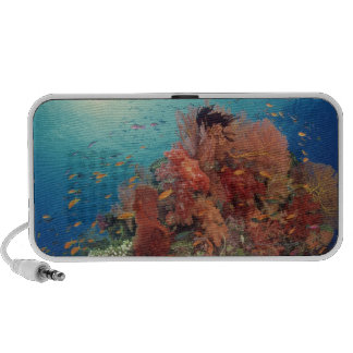 Reef scenic of hard corals , soft corals 2 portable speakers