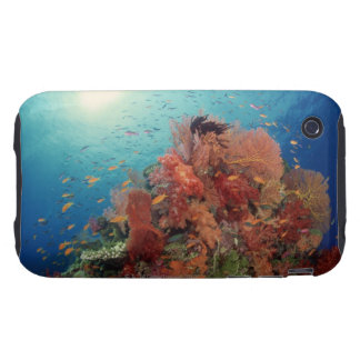 Reef scenic of hard corals , soft corals 2 tough iPhone 3 cases