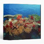 Reef scenic of hard corals , soft corals vinyl binders
