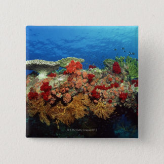 Reef scenic of hard corals , soft corals button