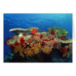 Reef scenic of hard corals , soft corals cards