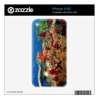 Reef scenic of hard corals , soft corals decal for the iPhone 4S