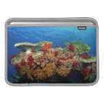 Reef scenic of hard corals , soft corals sleeves for MacBook air