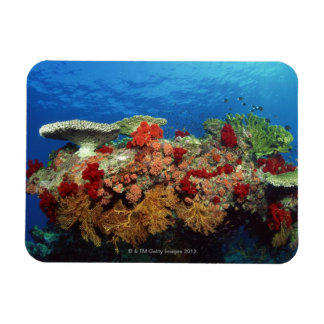 Reef scenic of hard corals , soft corals magnet