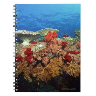 Reef scenic of hard corals , soft corals notebook