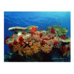 Reef scenic of hard corals , soft corals post cards