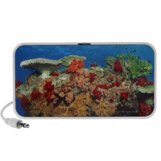 Reef scenic of hard corals , soft corals speaker