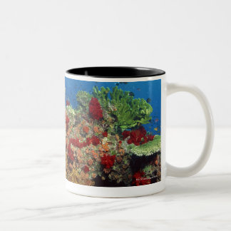 Reef scenic of hard corals , soft corals Two-Tone coffee mug