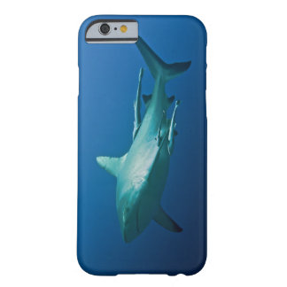 Reef Shark Great Barrier Reef Coral Sea Barely There iPhone 6 Case