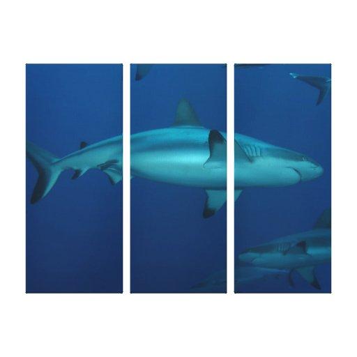 Reef Shark Great Barrier Reef Coral Sea Canvas Print
