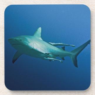 Reef Shark Great Barrier Reef Coral Sea Coaster