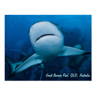 Reef Shark Great Barrier Reef Coral Sea Gift Postcard