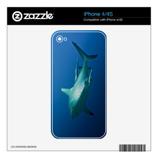 Reef Shark Great Barrier Reef Coral Sea iPhone 4 Decals