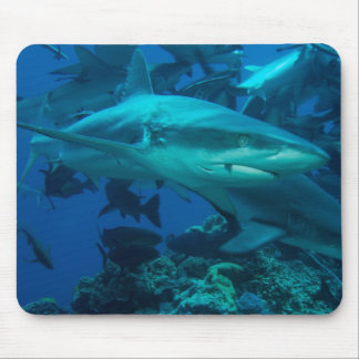 Reef Shark Great Barrier Reef Coral Sea Mouse Pad