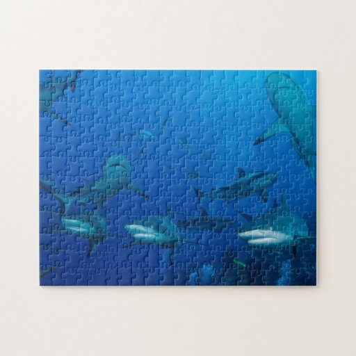 Reef Shark Great Barrier Reef Coral Sea Puzzle