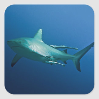 Reef Shark Great Barrier Reef Coral Sea Square Sticker