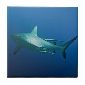 Reef Shark Great Barrier Reef Coral Sea Tile