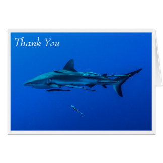 Reef Shark in the Coral Sea Greeting Card