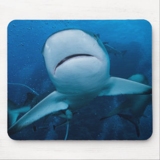Reef Shark of the Coral Sea Mousepad